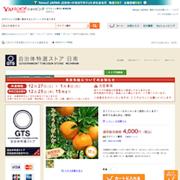 みやうらぽんかん(M玉):452040001-0001:自治体特選ストア日南 - Yahoo!ショッピング - ネットで通販、オンラインショッピング